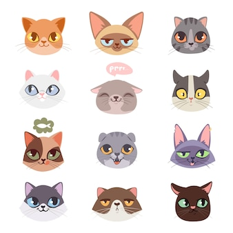 Conjunto de ilustrações de cabeças de gatos
