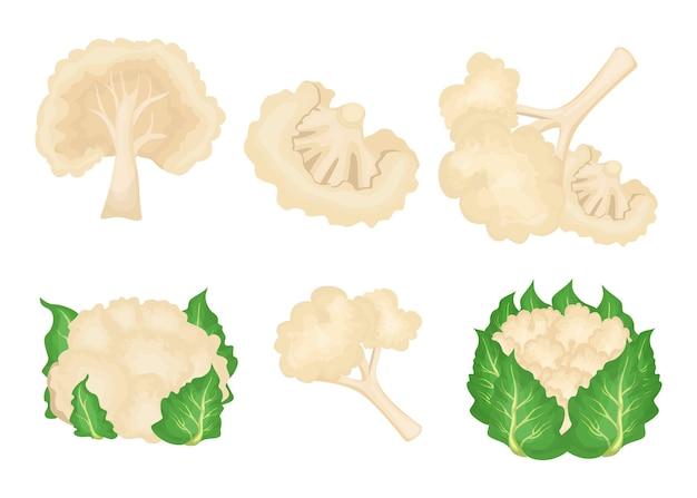 Conjunto de ilustrações de couve-flor de desenho animado