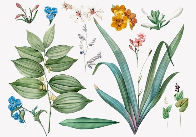 Conjunto de ilustrações de flores e plantas