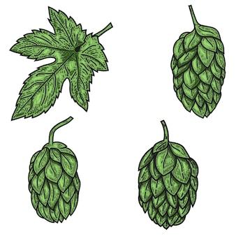 Conjunto de ilustrações de lúpulo de cerveja em estilo de gravura.