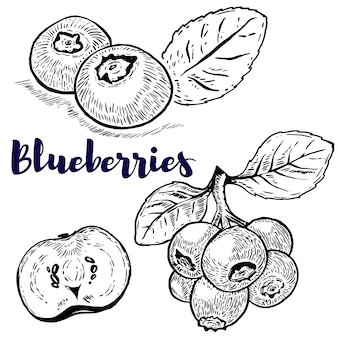 Conjunto de ilustrações de mirtilos em fundo branco. elementos para o logotipo, etiqueta, emblema, sinal, cartaz, menu. ilustração