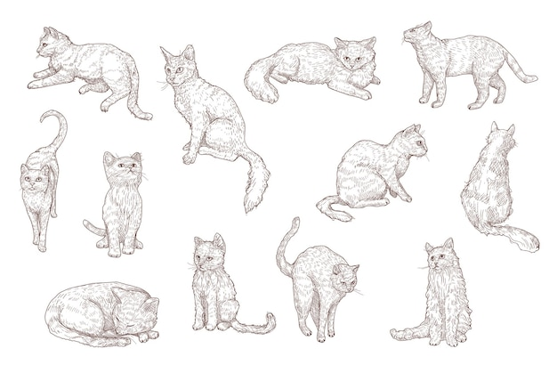 Conjunto de ilustrações desenhadas à mão de gatos fofos e gatinhos engraçados