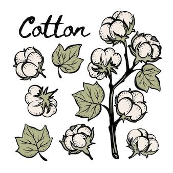 Conjunto de ilustrações desenhadas à mão, desenho colorido de algodão com cápsula de galhos e folhas de planta em estilo vintage