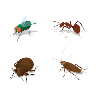 Conjunto de ilustrações insetos