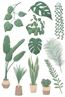 Conjunto de ilustrações vetoriais de plantas caseiras: folha de monstera