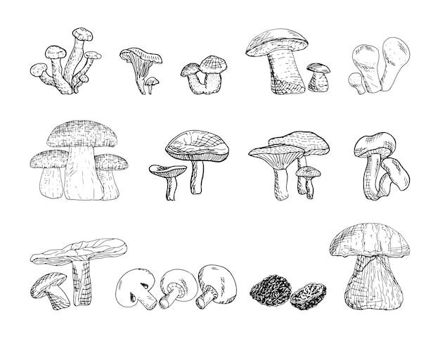 Conjunto de ilustrações vetoriais monocromáticas de cogumelos em estilo de desenho
