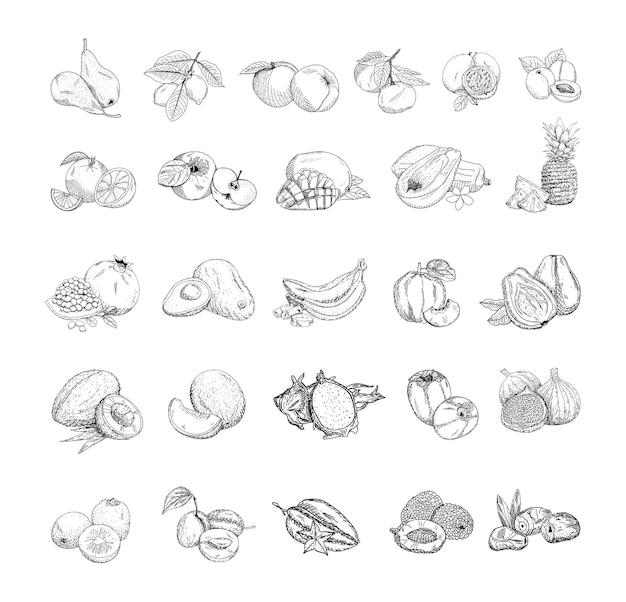 Conjunto de ilustrações vetoriais monocromáticas de frutas em estilo de desenho.