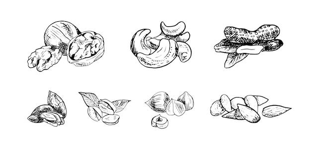 Conjunto de ilustrações vetoriais monocromáticas de nozes em estilo de desenho