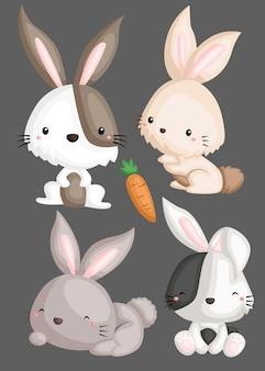 Conjunto de imagem de coelho