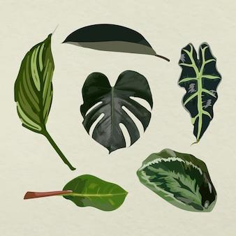 Conjunto de imagens de arte vetorial de folhas tropicais
