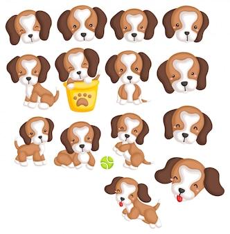 Conjunto de imagens de beagles