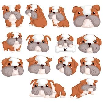 Conjunto de imagens de bulldog