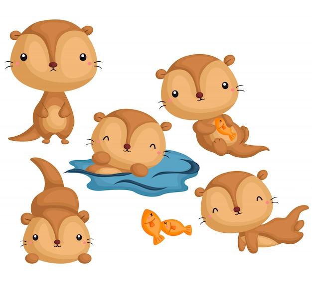 Conjunto de imagens de lontra