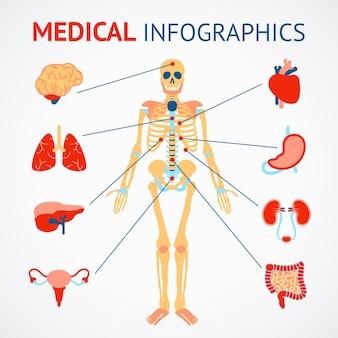 Conjunto de infografia médica de esqueleto humano e ilustração vetorial de órgãos internos