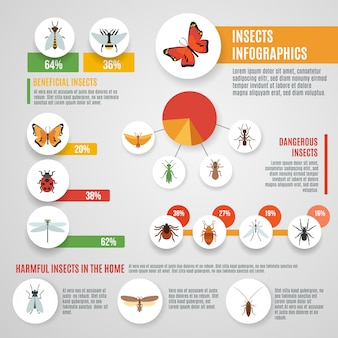 Conjunto de infográfico de insetos