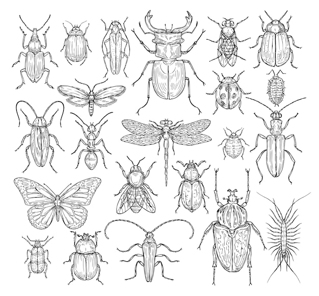 Conjunto de insetos desenhados à mão