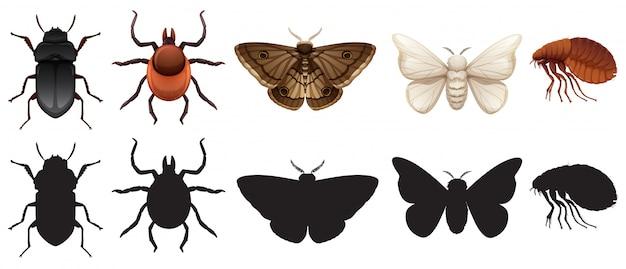 Conjunto de insetos e silhuetas