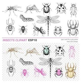 Conjunto de insetos ilustração em vetor esboço desenhado à mão besouros libélula aranha