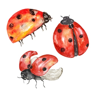 Conjunto de joaninha em aquarela, insetos brilhantes a voar.