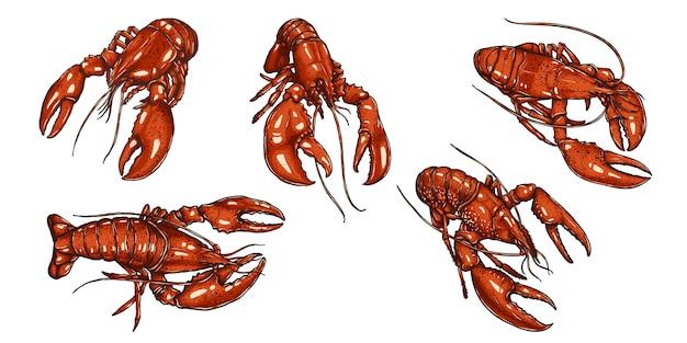 Conjunto de lagosta à mão de desenho.