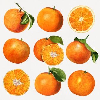 Conjunto de laranjas frescas naturais desenhadas à mão