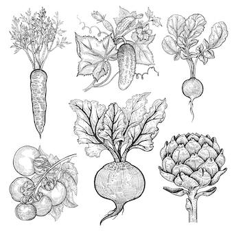 Conjunto de legumes. cenoura, pepino, rabanete, tomate, beterraba, alcachofra.