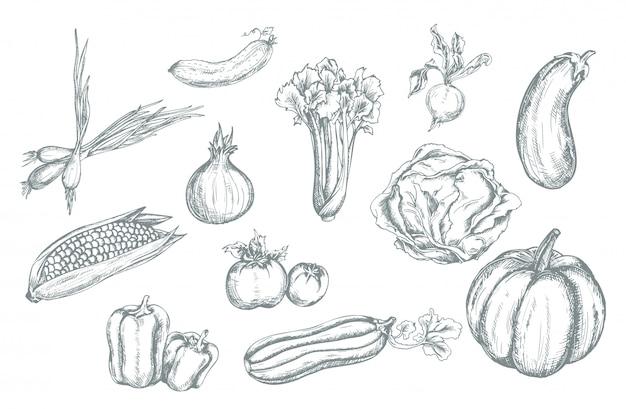 Conjunto de legumes desenhados à mão.