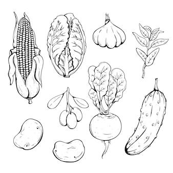 Conjunto de legumes frescos com milho