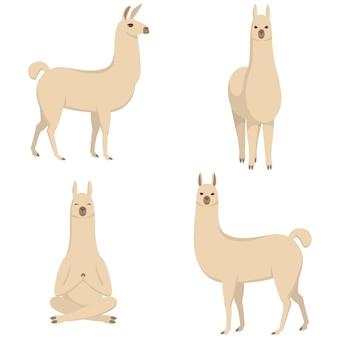 Conjunto de lhamas em poses diferentes. animais fofos no estilo cartoon.