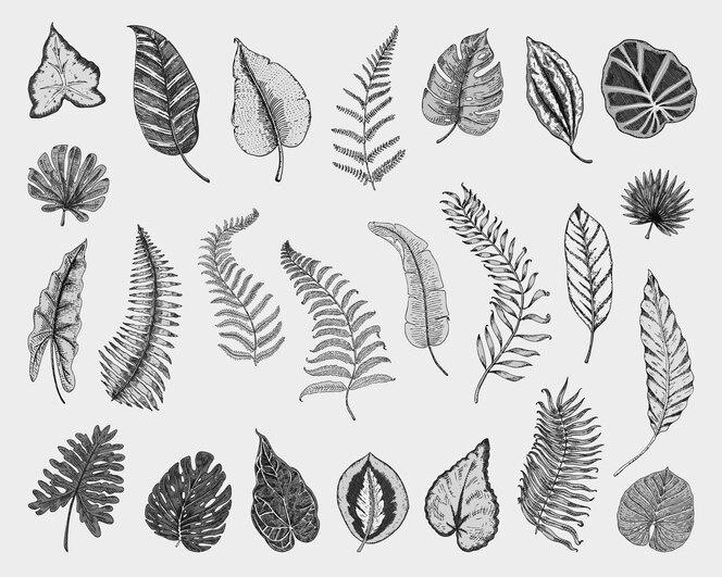 Conjunto de licença tropical ou exótica. flores gravadas vintage, mão desenhada. produto orgânico botânico.