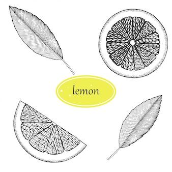 Conjunto de limão. isolado no fundo branco mão ilustrações desenhadas. estilo retrô.