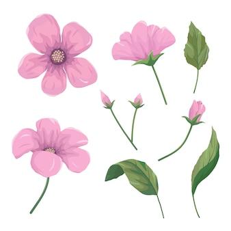 Conjunto de lindas flores cor de rosa