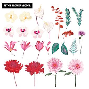 Conjunto de lindas flores de orquídea botânica