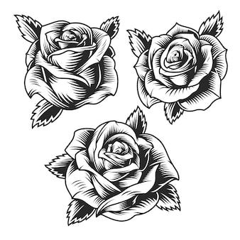 Conjunto de lindas flores rosas vintage