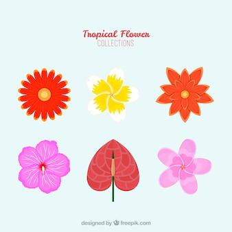 Conjunto de lindas flores tropicais