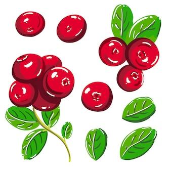 Conjunto de lingonberry. bagas vermelhas e folhas verdes. ilustração vetorial