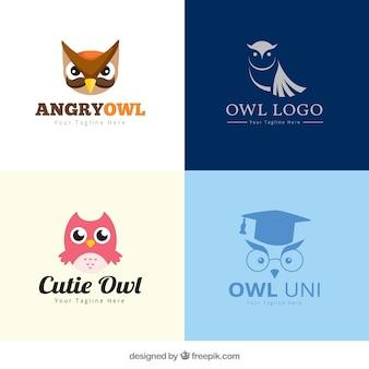 Conjunto de logo da coruja criativa