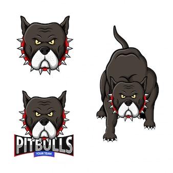 Conjunto de logotipo de esporte pitbull mascote