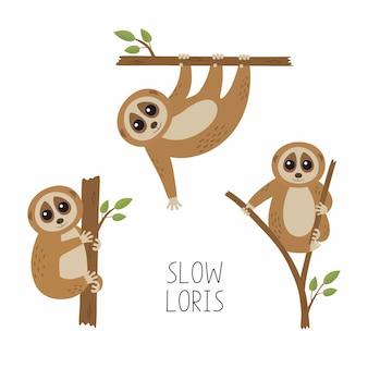 Conjunto de loris em galhos de árvores
