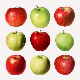 Conjunto de maçã fresca desenhada à mão