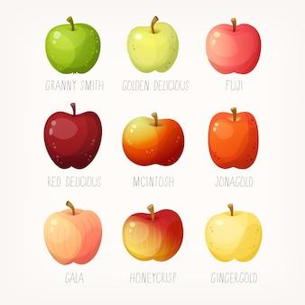 Conjunto de maçãs com nomes variedade de frutas para diferentes fins