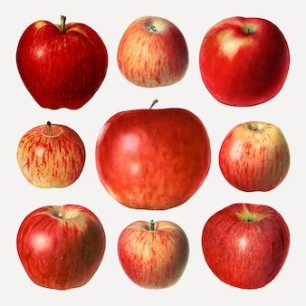 Conjunto de maçãs vermelhas desenhadas à mão
