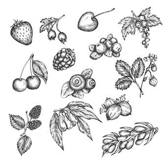 Conjunto de mão desenhada berry.