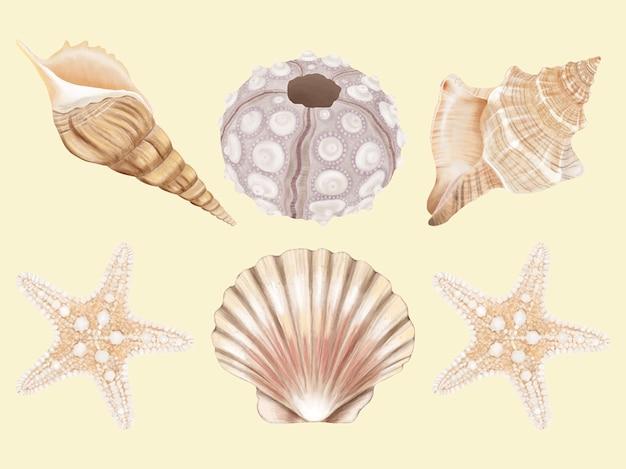 Conjunto de mão desenhada de concha do mar
