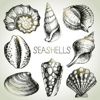 Conjunto de mão desenhada de conchas. elementos de design de esboço