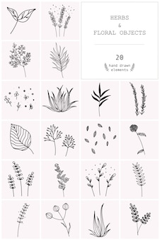 Conjunto de mão desenhada de ervas vetoriais e objetos florais.