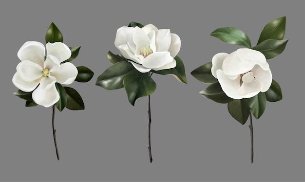 Conjunto de mão desenhada de flores botânicas magnólias realistas
