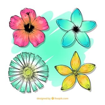Conjunto de mão desenhada de flores tropicais coloridas