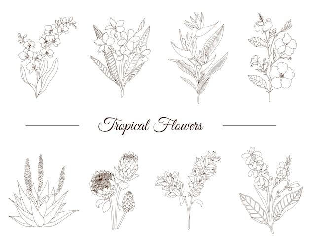 Conjunto de mão desenhada de flores tropicais