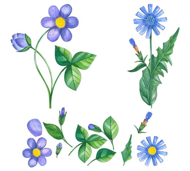 Conjunto de mão desenhada de flores violetas e azuis em aquarela